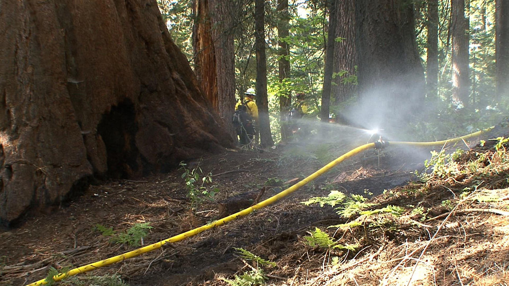 . This photo obtained August 26, 2013 courtesy of the US Forest Service, shows sprinklers as they are placed around the perimeter of the Merced and Tuolumne Groves of Giant Sequoias in an effort to protect the big trees should the wildfire advance on the groves. A wildfire raging on the northern tip of California\'s Yosemite National Park threatens a world-famous site of natural beauty and the reservoir that provides San Francisco with drinking water. AFP PHOTO / US FOREST SERVICE =HO/AFP/Getty Images