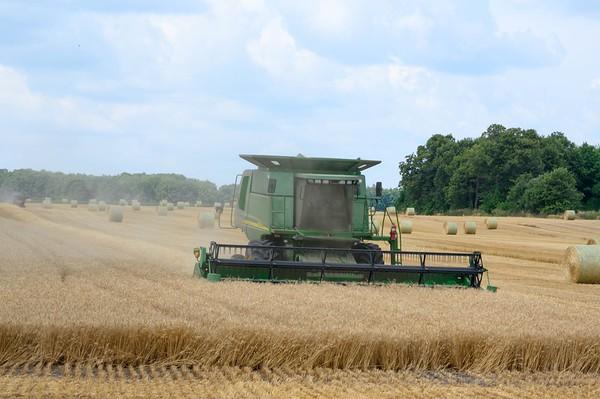 20190805 Harvest