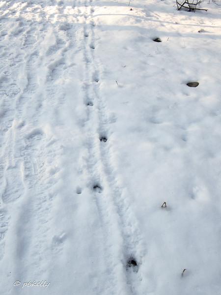 deer tracks 012120.jpg