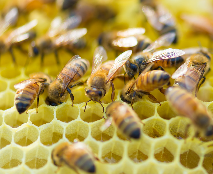 The Bees of Darling Pond