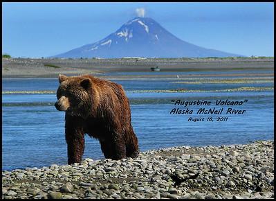 Alaska McNeil River Bears