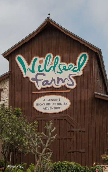 We played tourist in the Hill Country.  This place grows and sells wildflower seeds.