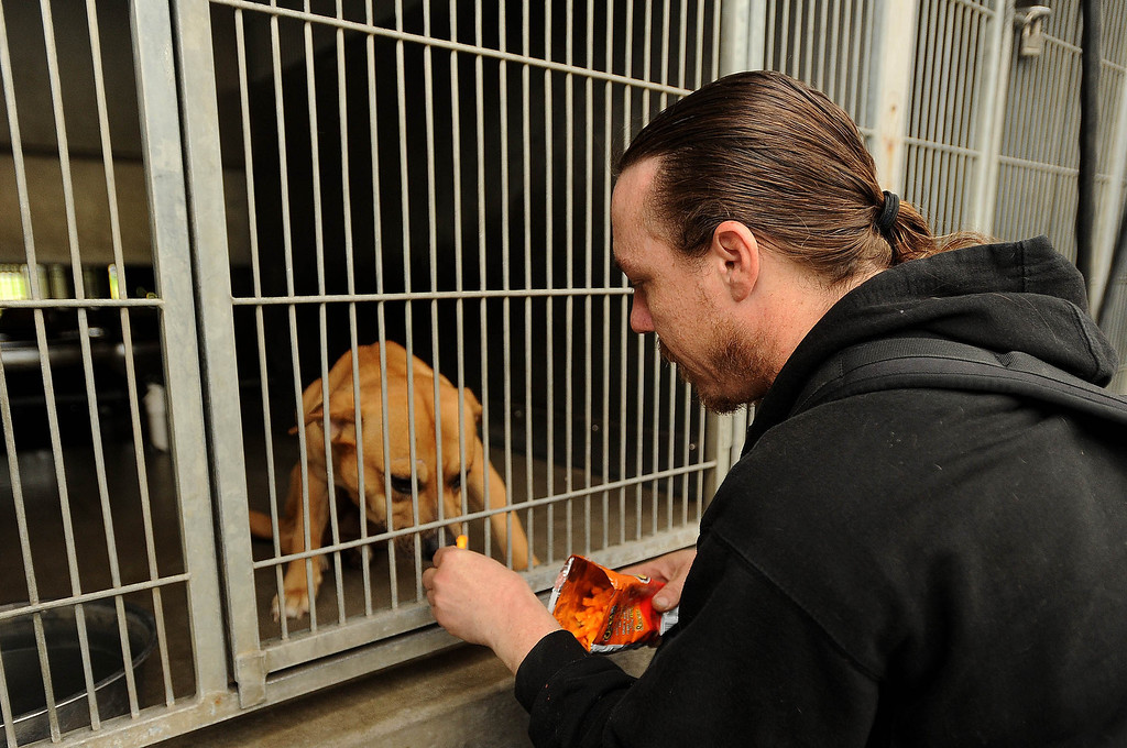 . Dave Thomas, 36, of San Bernardino, right, visits his dog Buzz Light Year at the City Animal Shelter in San Bernardino February 19, 2013.  GABRIEL LUIS ACOSTA/STAFF PHOTOGRAPER.