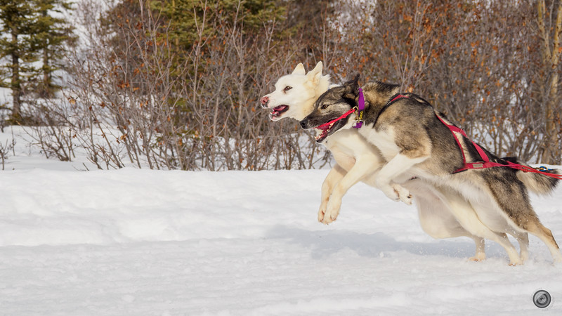 20190325_Blaire_and_Liz_Mushing_32.jpg