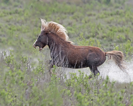 Wild Horses of The East Coast