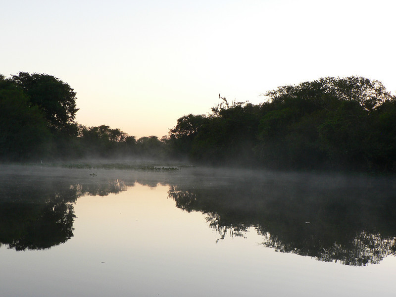 Morning mist in the Pantanal.
