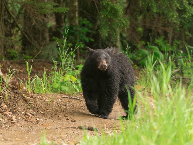 eddies bear.JPG