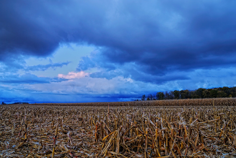 These stormy clouds look blue. This was taken right at sunset but I paid the price. I really wanted to jump in the corn field so I could have a foreground. Did you know that farmers put manure as soon as the corn is harvested? My boots stink but hope the pic does not! Cheers JY