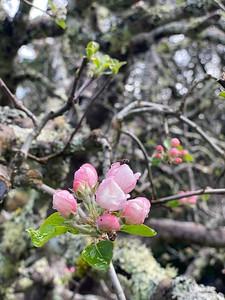 Spring in Santa Cruz Felton