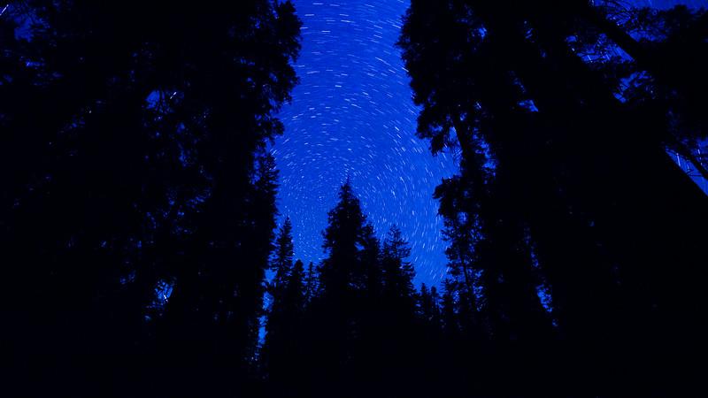 20140825_sequoia_0312.jpg