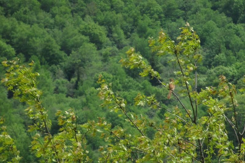 Graveyard Ridge Trail (5,320')