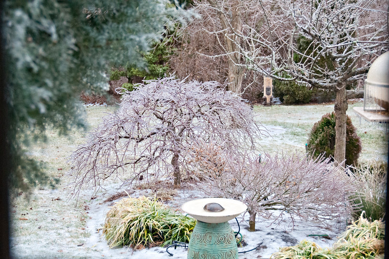 Back yard bird feeder bed