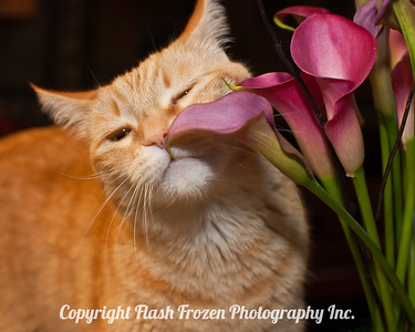 Pet Portraits - Dog Portraits, Cat Portraits, Horse Portraits