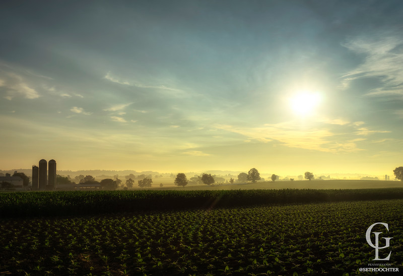 sunrise - fresh tobacco fields and corn (p).jpg