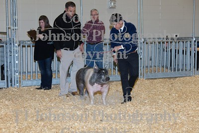 2016 KISD Swine Class 6