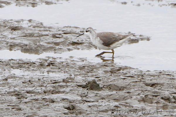2014-04-04 Riverlands Migratory Bird Sanctuary
