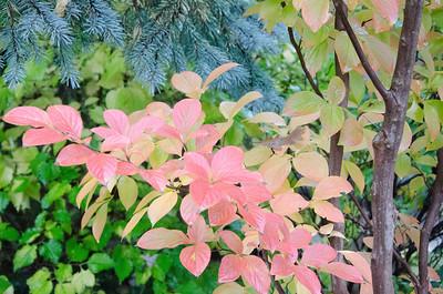 Autumnal Anderson Japanese Garden,Rockford,IL,10/13/12