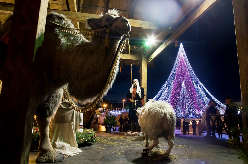 . A camel and sheep take part in a nativity play, with the national Christmas tree standing in the background, in Cathedral Square in Vilnius, Lithuania, Tuesday, Dec. 12, 2017. (AP Photo/Mindaugas Kulbis)