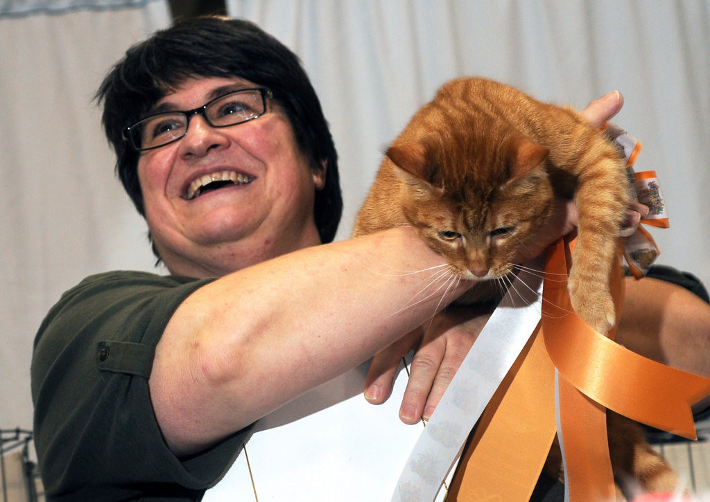 . Gena Garton of Milwaukee holds her 3-year-old male household pet, Blake The Red, after winning  the Spectator\'s Choice Award at the Saintly City Cat Club\'s 38th Annual Championship Cat Show. (Pioneer Press: Scott Takushi)