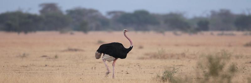 East Africa, Serengeti and Zanzibar - Grumeti River Camp - Day 4