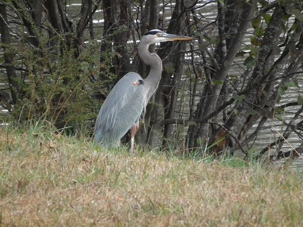 Newnan, GA - Chattahoochee Bend State Park