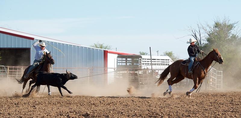 Sale horse action