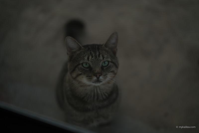 Pets-136.jpg