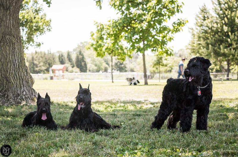 7-2-2017 - Inga, Toyo, Argos - Dog Park