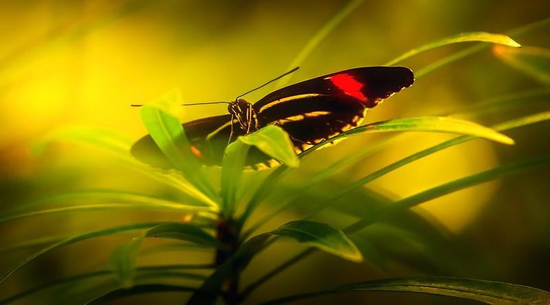 Butterfly-192.jpg