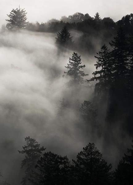 windy-hill-fog-in-trees.jpg
