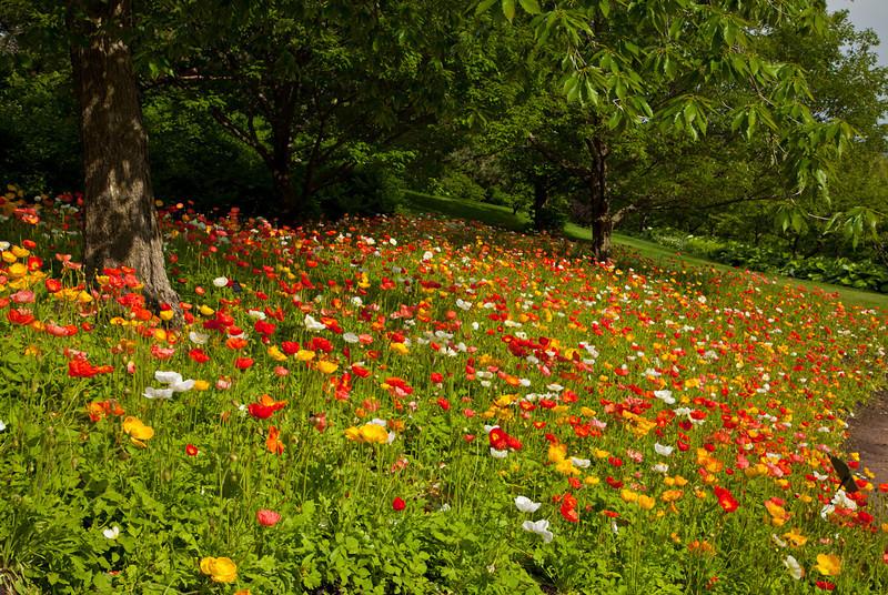 Botanic_Garden13-0606.jpg