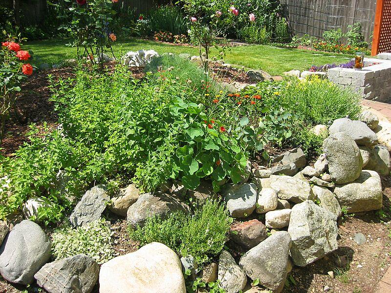 garden-2002-06-0090_std.jpg