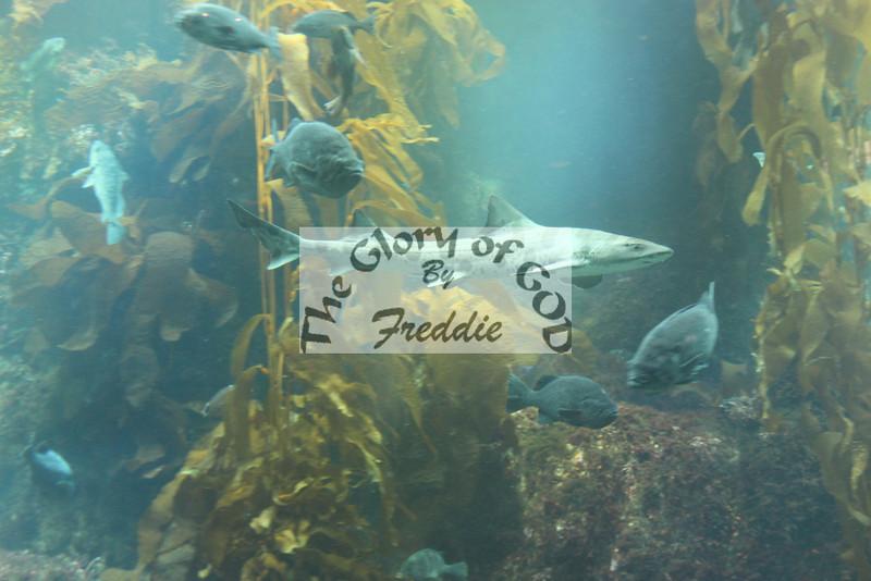 Aquarium 20005.jpg