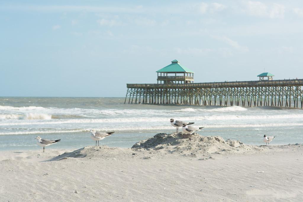 Seagulls at Folly Beach Peir