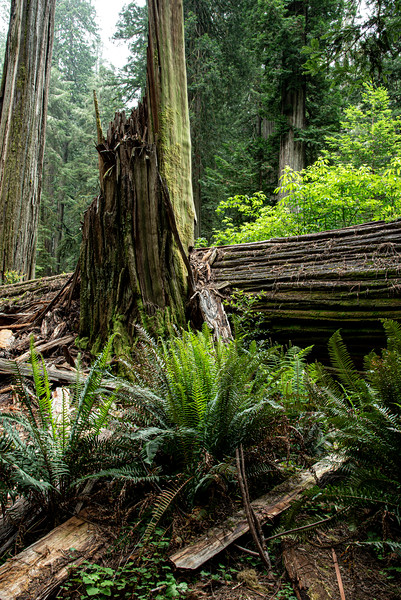 redwoodsFin29-1147.jpg
