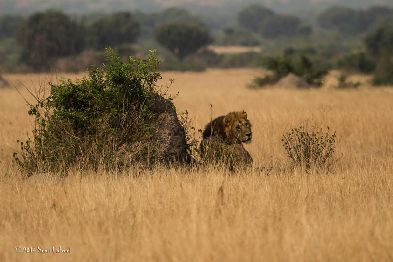 Lions Queen Elizabeth - S-6.jpg