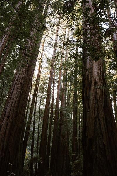 Forest_City_Photographs_Honeymoon_Califonia_San_francisco_Yosimite-40.jpg
