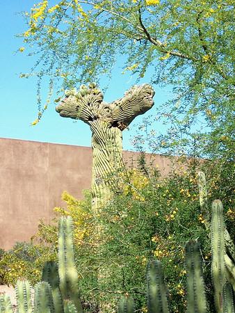 The Arizona-Sonora Desert Museum