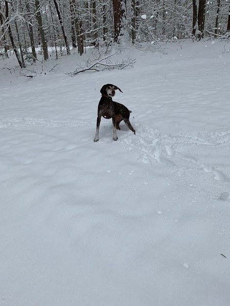 2019.01.13 - Morgen trying to catch snowballs 8.JPG
