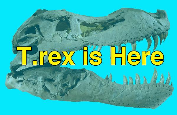 rex_header copy.jpg