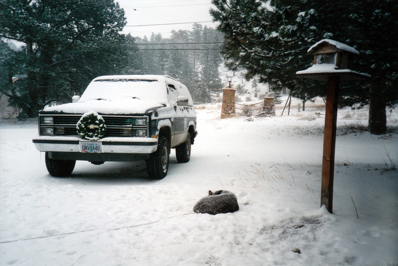 Clea napping in the snow.jpg