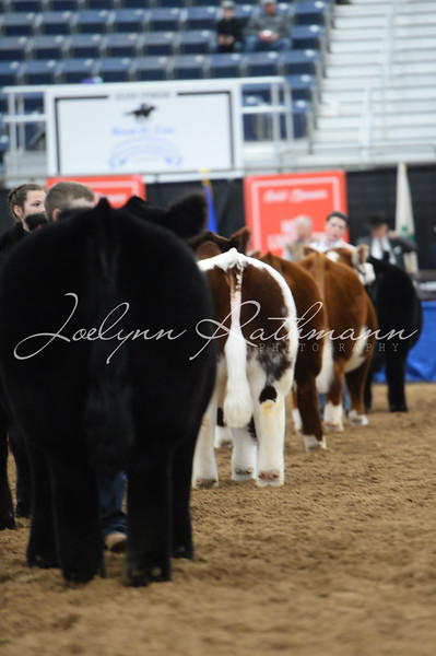 2021 The Patriot Junior Market Steer Show