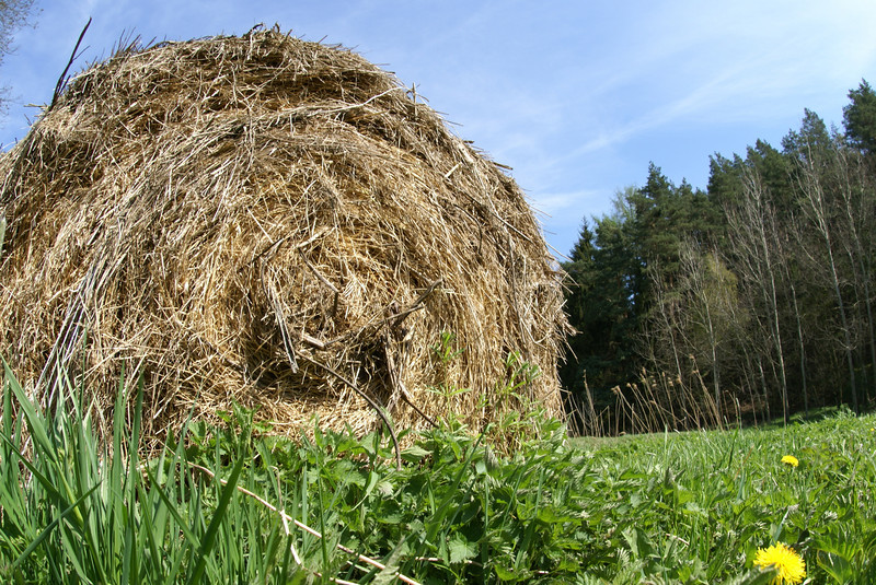 Hay.  I must have picture for every photo album.