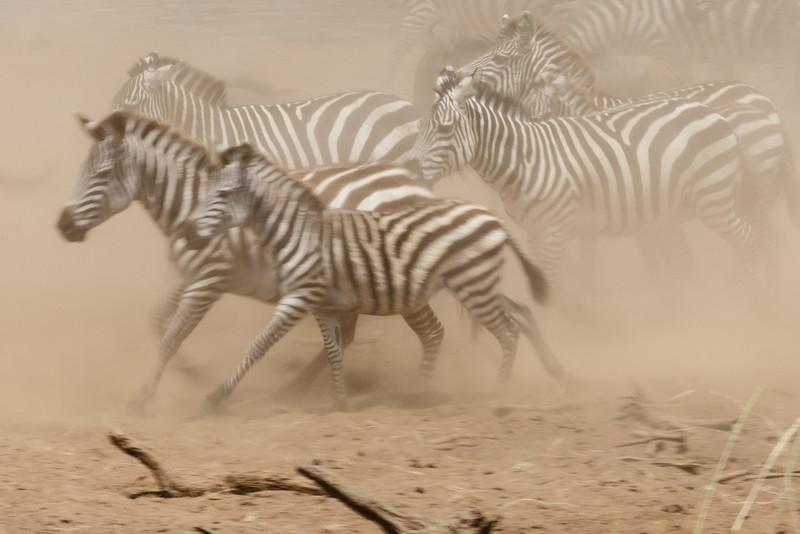 Kenya 2015-04641.jpg