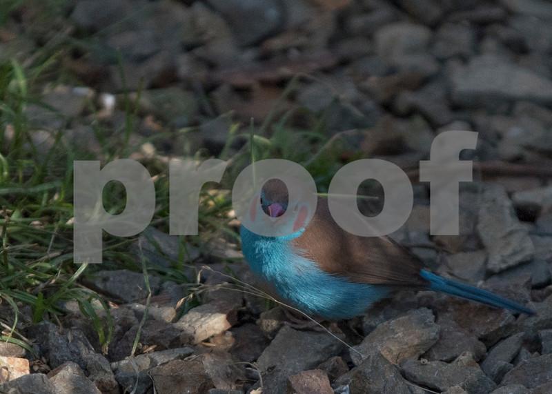 birds 12.jpg