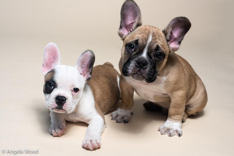 Puppies58.jpg