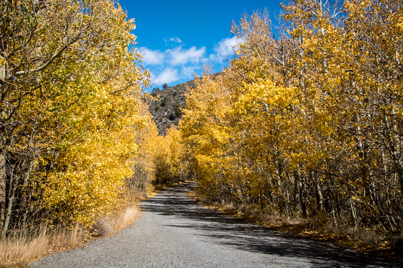 On the Road to Lundy Lake