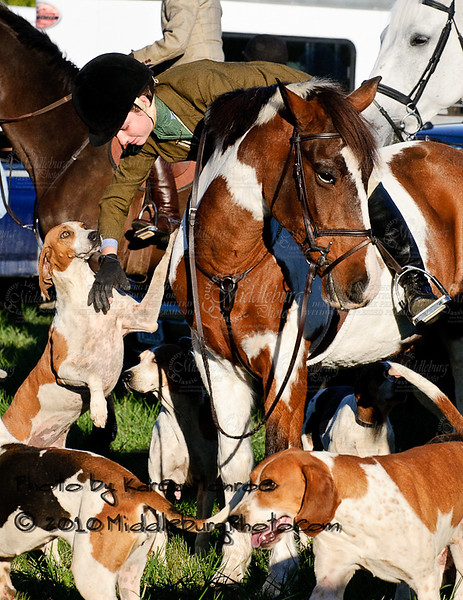 Piedmont Fox Hounds 2010-Trinity