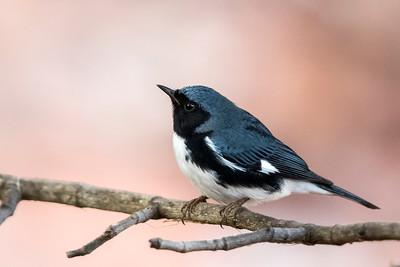 Birds - Cuba