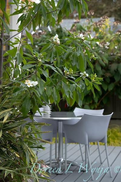 Lisa Bauer - designer's garden_1289.jpg